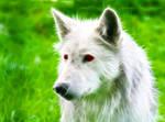 Fractal Artic Wolf