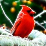 Fractal Cardinal