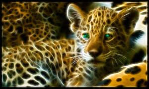 Fractal jaguar baby: Izaua