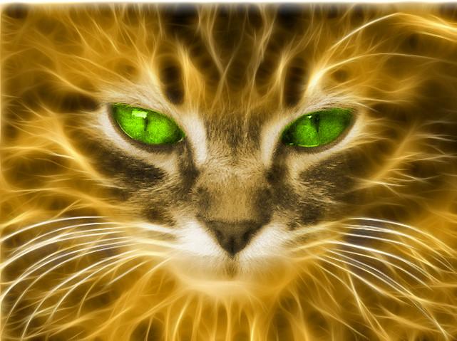 Fractal bilkent cat by debby-saurus