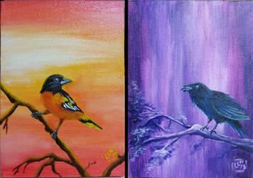 Baltimore Birds - Oriole and Raven
