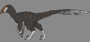 Day 1 -  Troodon formosus