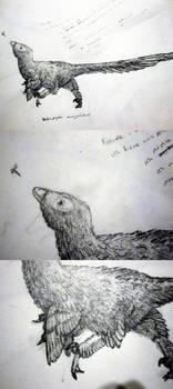 Velociraptor Mongolensis sketch