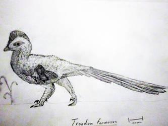 Troodon formosus sketch