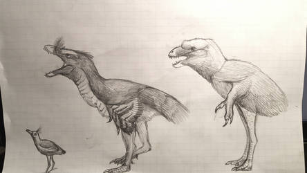 A selection of flightless Enantiornithines