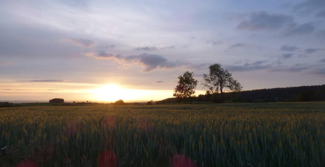 Sunset on the fields by mekheke