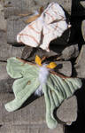 Plush Luna Moth and Swallowtail Moth