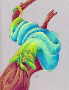 Python Naga