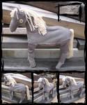Golden the Pony Boy