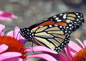 The Butterfly and Pink