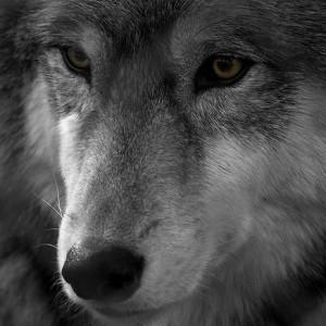 thehunterwolf's Profile Picture
