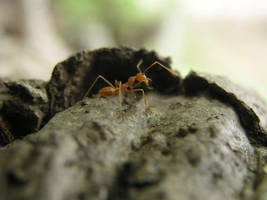 The Ant by crisisnyc
