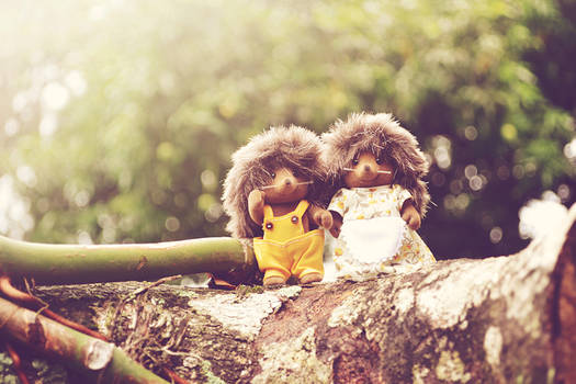 Mr. And  Mrs Hedgehog on their Travels.