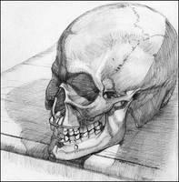 Skull still life by NathanRosario