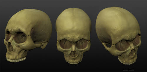 3D Skull by NathanRosario