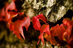 Autumn Leaves by OlivierAccart