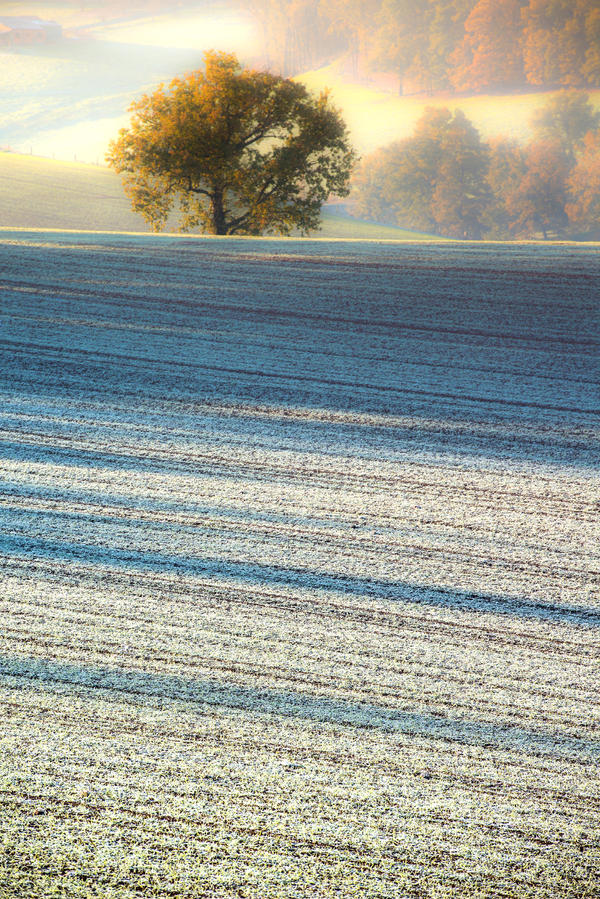 Frost by OlivierAccart