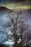 Trees XII