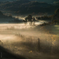 Radiance (a golden morning) by OlivierAccart