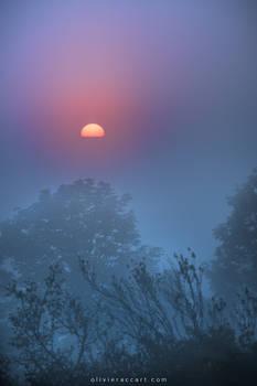 Dawn thrill