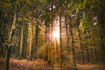 In the woods by OlivierAccart