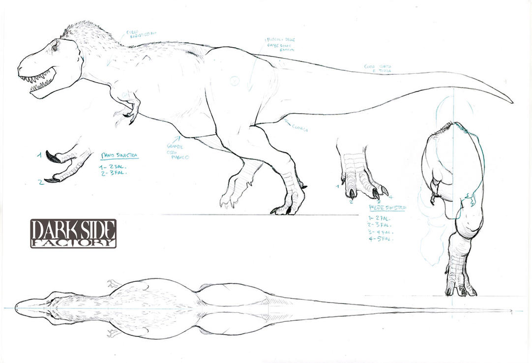 Drawing dinosaurs anatomy and sketching