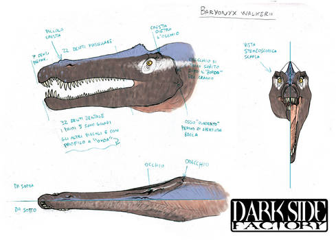 Baryonyx Model Sheet - Head
