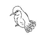 Hummingbird - Lineart