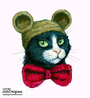 Cat with hat : Teddy bear