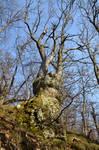 L'albero infinito