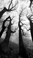 The song of trees II