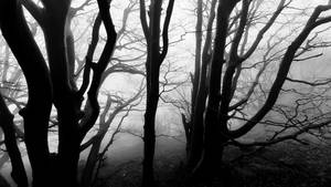 The cortege of spirits