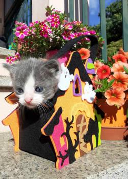 A spring Halloween