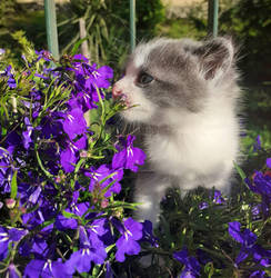 A flower among flowers