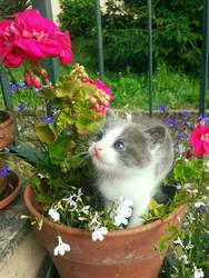 A kitten in Wonderland
