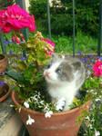 A kitten in Wonderland by baroquedoll
