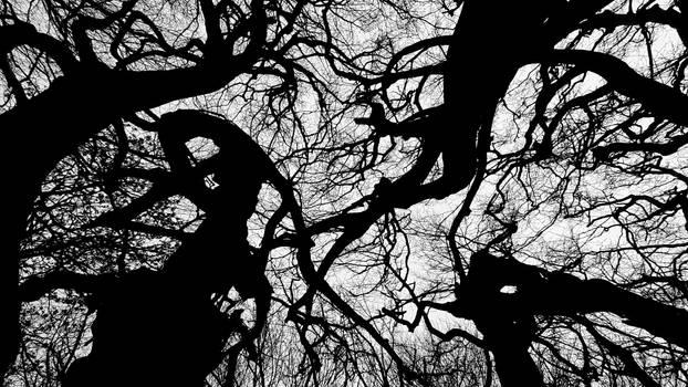 Halloween trees II