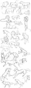 Animal sketches by Detkef