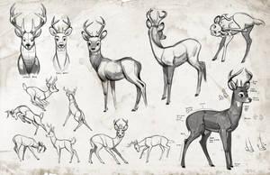 Jay deer form