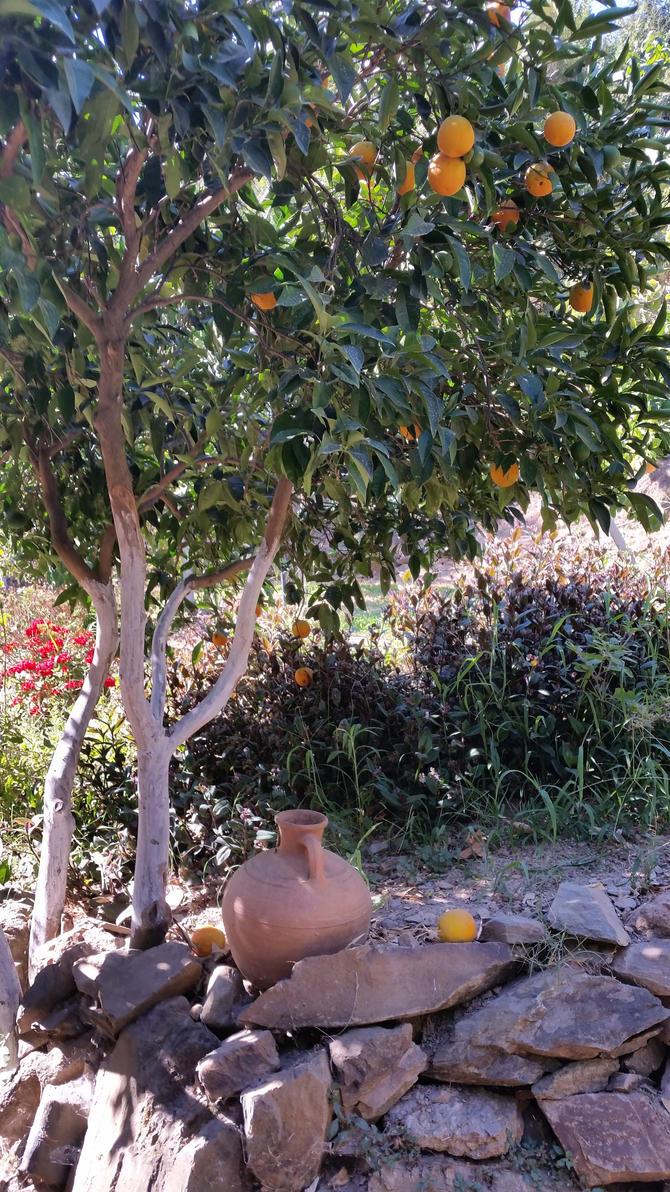 KRETA - At the Botanical Garden by cactusmumkate