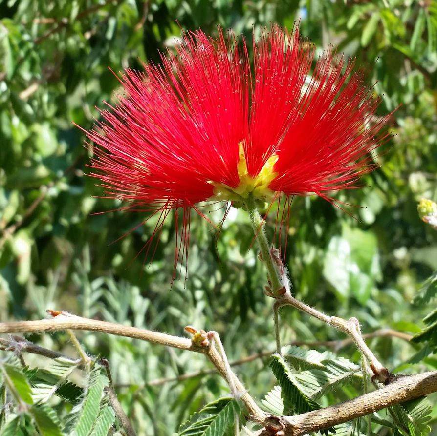 KRETA - Flame by cactusmumkate