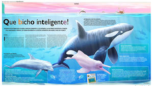 Dolphins Pages