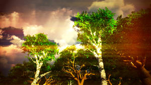 Sunsetrees2-crazy Colors by macsix