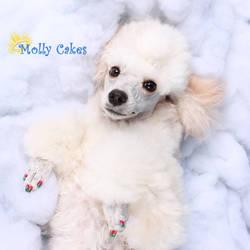 Molly Cakes by DizyDezi