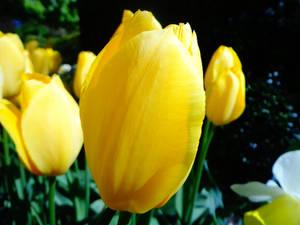 FLOWER#8