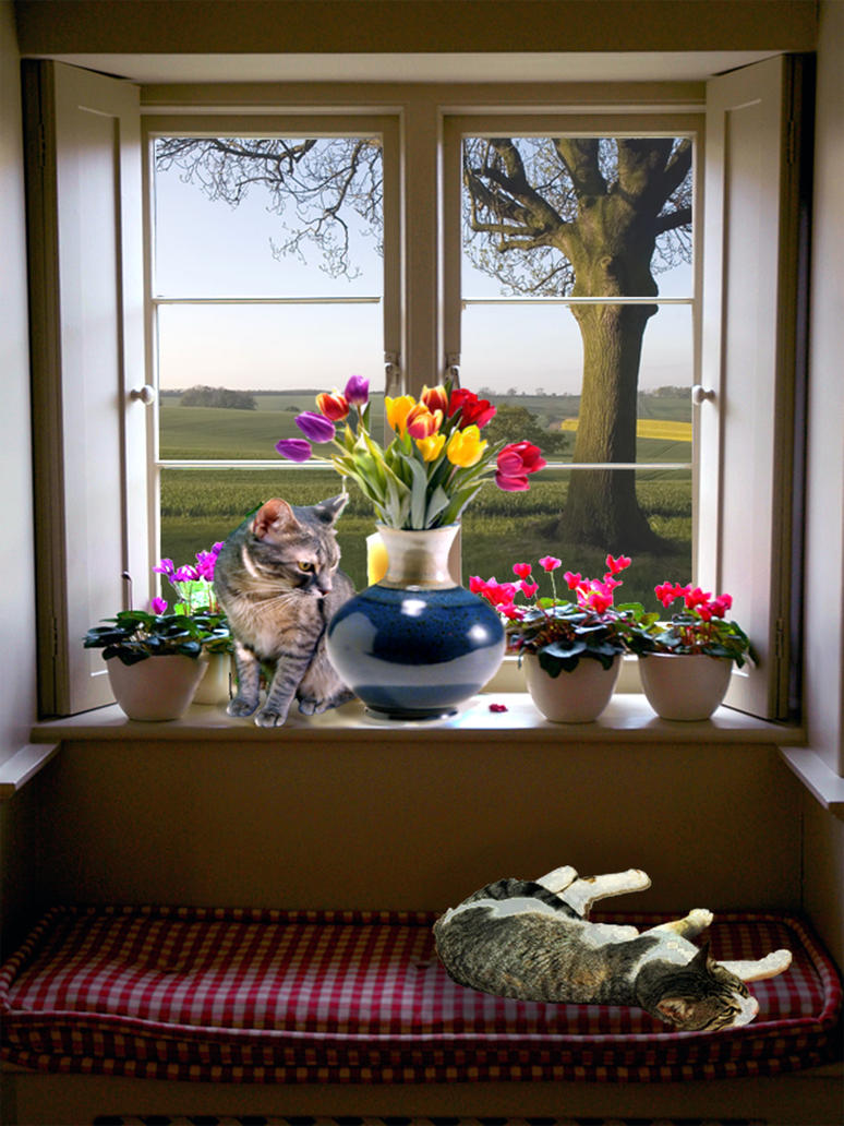 Kitties Dm Ii Assignment 1 By Cannibalpineapple On