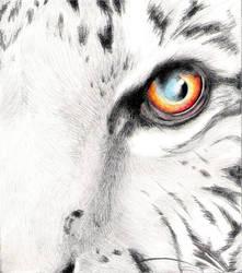 ..Tiger Sketch.. by LadyBaroness