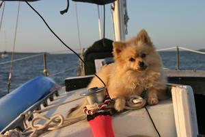 Sailor Puppy by zorinlynx