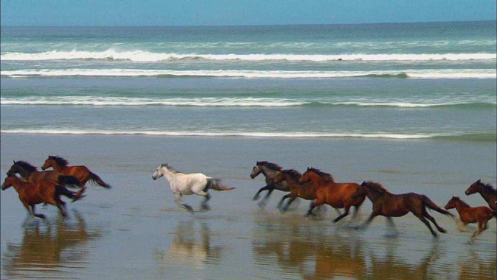 horses near the sea by Narwnoor