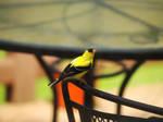 Yellow Bird Stock by Things0fMagic